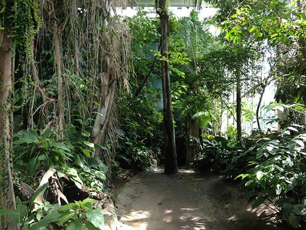 cosmocaixa rainforest