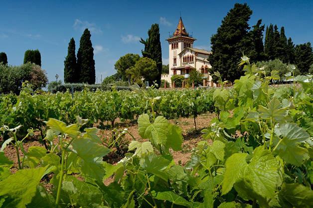 cataln drinks vinyard