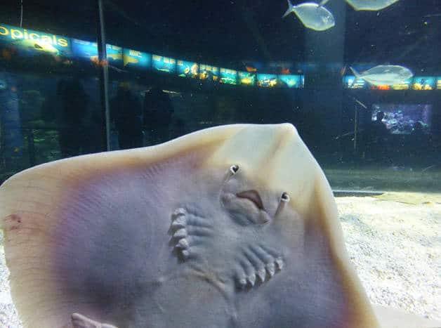ray aquarium Barcelona with family