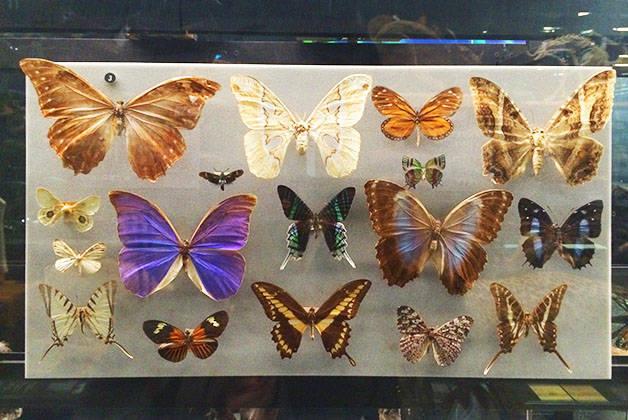 natural science museum butterflies