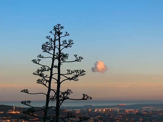carreterra de les aigues tree and sunset