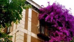 Sarrià building flowers