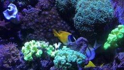 Aquarium Barcelona March