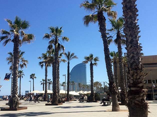 hotel W palm trees
