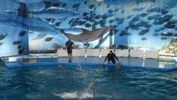Zoo dolphin