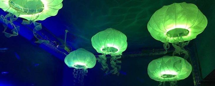 Verne jellyfish